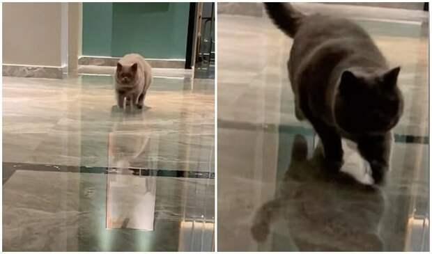 Котейка расплакался, когда услышал хозяйку в камере наблюдения