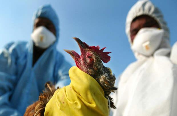 Последний подарок 2020-го: в Японии зафиксирована вспышка высокопатогенного гриппа