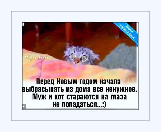 Жду приглашений на Новый Год! В гостях не вредничаю: ем, чем угощают... Пью, что наливают... Сплю, с кем положат...