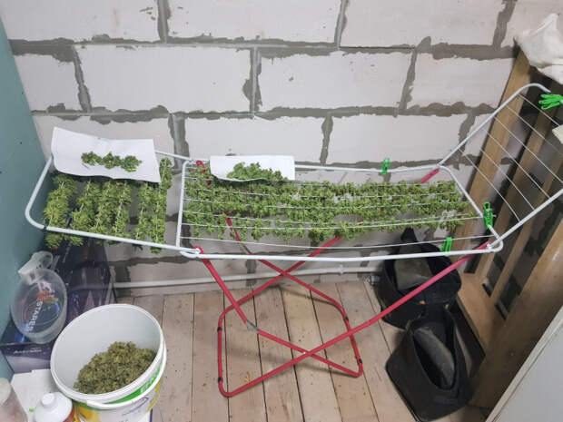 Житель Удмуртии устроил нарколабораторию у себя дома