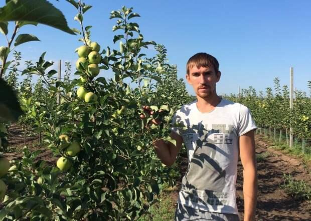 Сорта яблок, которые не подвели в кризисный 2020 год