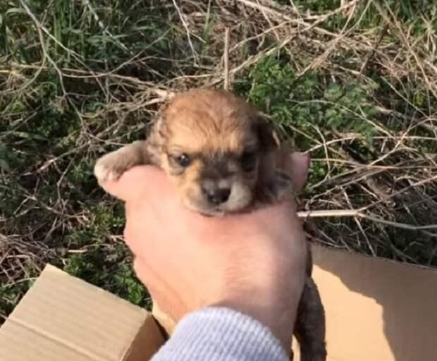 В траве стояла коробка, а в ней лежали крохотные щенки. Кто-то выбросил их, словно мусор