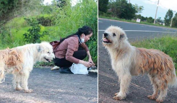 Собака ждала своих хозяев 4 года и вот чем всё закончилось