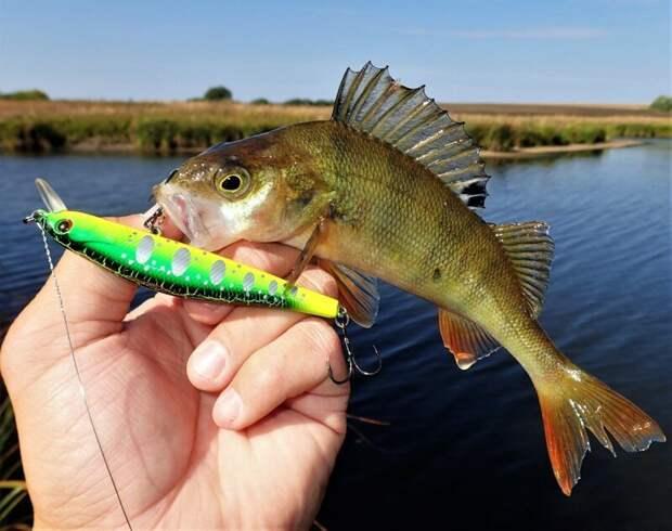Жадность окуня сгубила  лето, природа, рыбалка, хобби