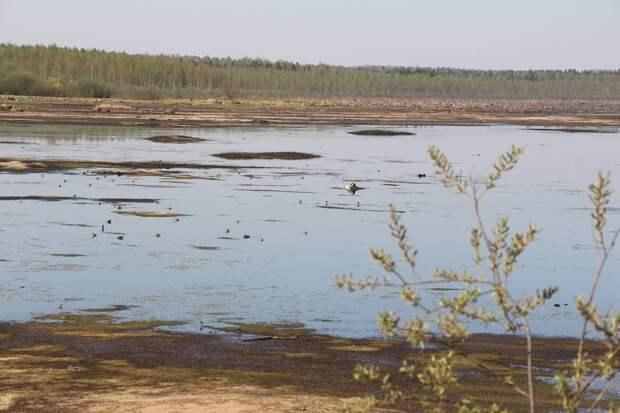 В Кезском районе Удмуртии высыхает местный пруд