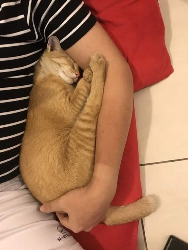 Во время шторма женщина приютила бездомного кота, а тот сразу понял, что это его новый дом