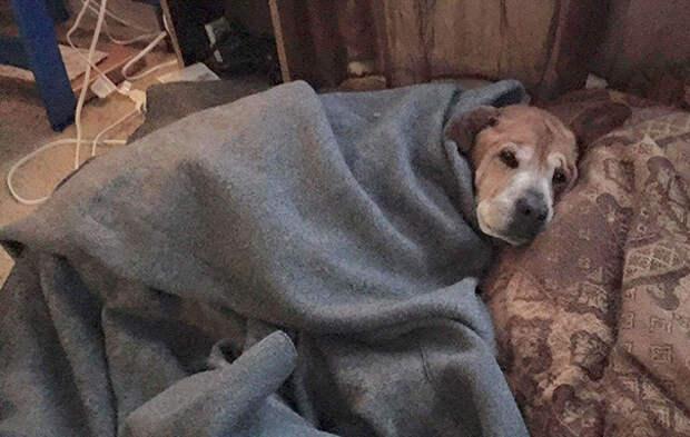 Она заметила в приюте 17-летнюю собаку. То, что девушка сделал для нее, просто волшебно!