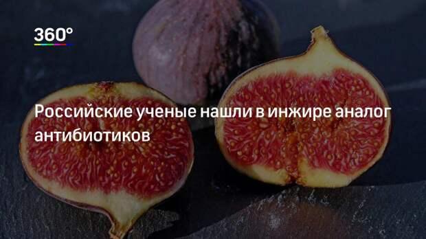 Российские ученые нашли в инжире аналог антибиотиков