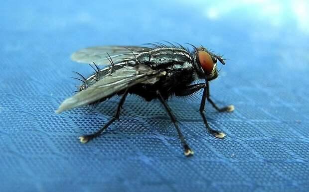 Ученые при помощи мух создали волокна, способные приклеить человека к потолку