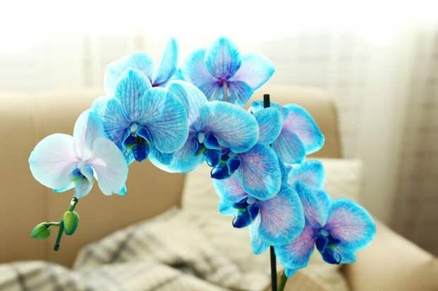 Как ухаживать за орхидеями: советы и рекомендации