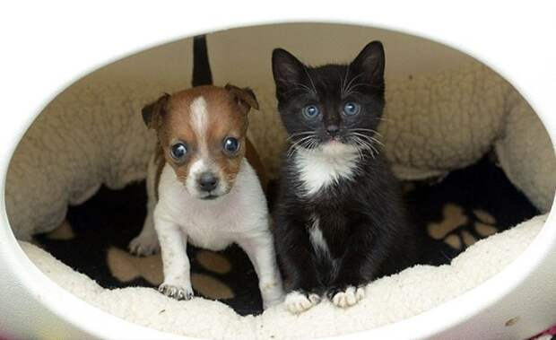 Готовьте ваши мимиметры! Умилительная история дружбы щенка и котенка