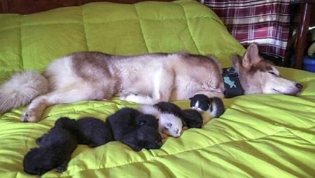 Собака не смогла пройти мимо и спасла новорождённых котят