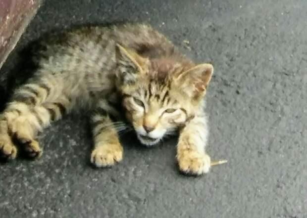 Котёнка пнули ногой, сломав ему челюсть, но теперь всё плохое позади и кроха счастлив