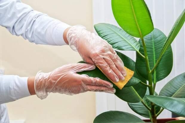 мыть растение