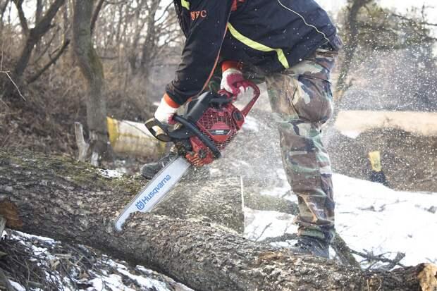 Жителя Удмуртии задержали по подозрению в незаконной вырубке 23 деревьев