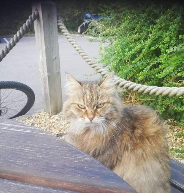 Добрые люди подкармливали бездомную кошку Тулу, а потом выяснилось, что она ведет двойную жизнь