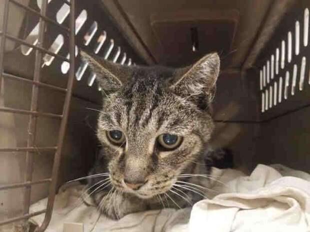 19-летний кот обнимал лапами хозяина, которого не видел 7 лет, а мужчина не мог сдержать слезы
