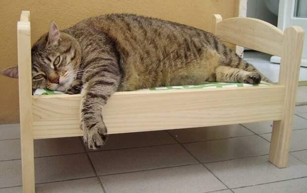 9. Ночью кошка спит в ногах и не перетягивает на себя все одеяло. жены, интересное, кошки, юмор