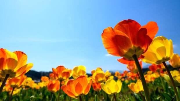 До +27 и без осадков. Какой будет погода в Барнауле и Алтайском крае 9 мая?