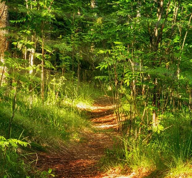 Проделки нечисти в смоленских лесах. Странная история