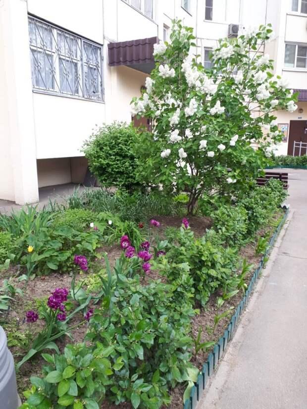 В Лианозове проходит ежегодный фестиваль дворовых цветников