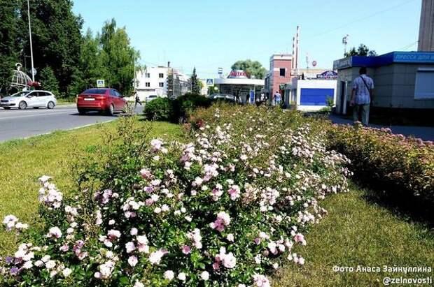 Зеленодольск в новом летнем сезоне украсят 250 тыс. цветов и 2,4 тыс. кашпо