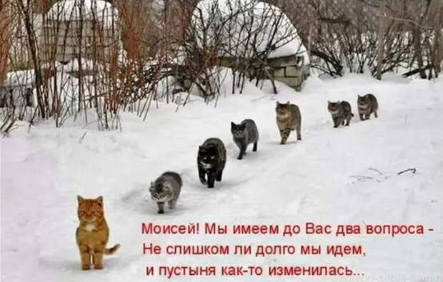 Кошачий Моисей