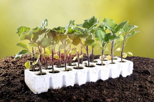 10 правил выращивания рассады для начинающих садоводов