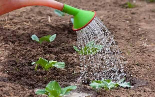 Если растение перестало расти... Хелат цинка в помощь