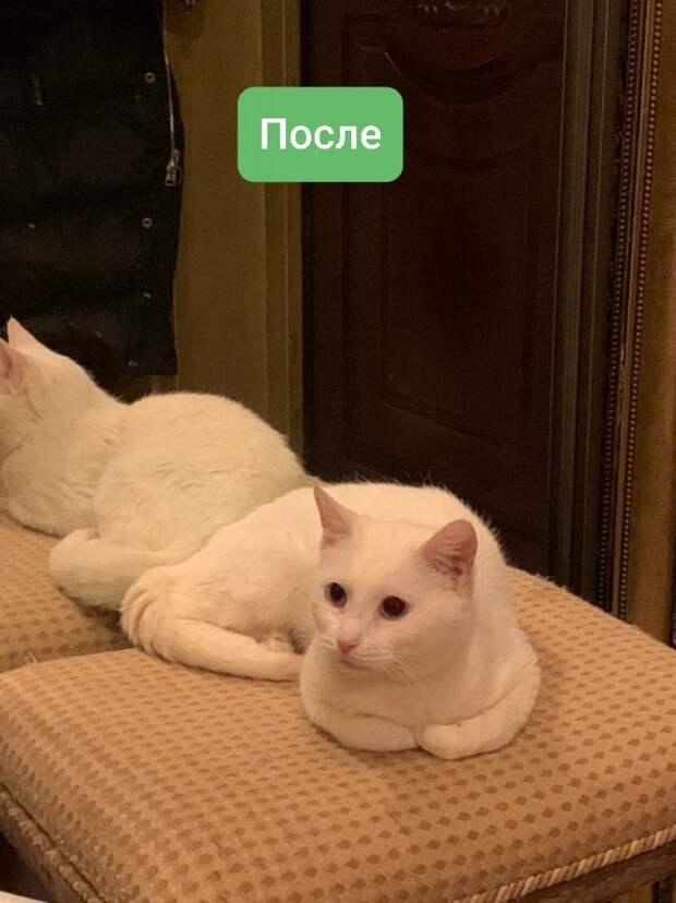 Жительница Строгина спасла кошек из неблагополучной квартиры на Исаковского