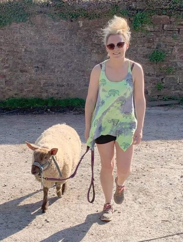 Овечка из Англии уверена в том, что она собака. Она даже может облаять и укусить