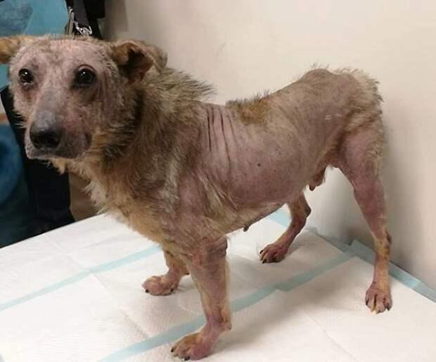 Люди выходили лысого пса, который несколько месяцев жил в брошенном доме