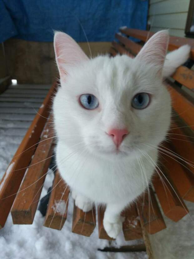 """Зимний дачный конкурс """"Найдите белого котика!"""" продолжается. Смотрите внимательно"""