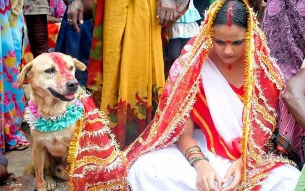 Поездки натанке, брак ссобакой иеще 8 вещей, которые совершенно законны внекоторых странах