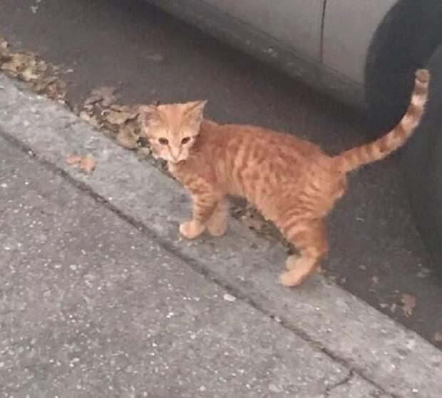 Уличный рыжий кот приходил в гости к людям, пока они не придумали, как ему помочь