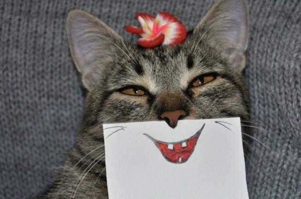 Подборка смешных картинок и фотографий из жизни (11 фото)
