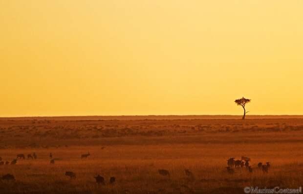 Африканское сафари с фотографом Marius Coetzee