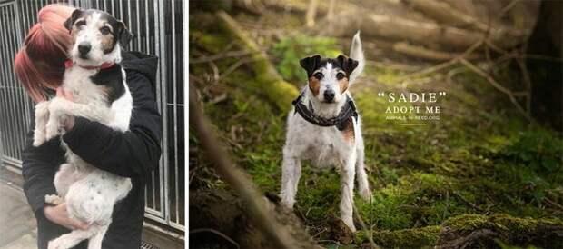 6. Сэди животные, помощь, портрет, приют, собака, фотограф, хозяин