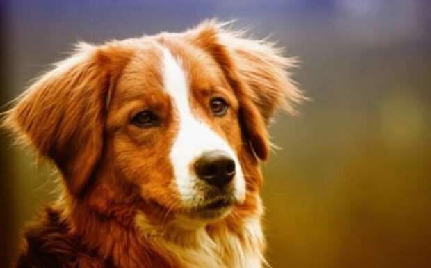 Считают ли собаки людей симпатичными?