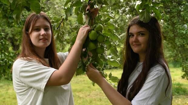 Школьники проводят лето, ухаживая за саженцами