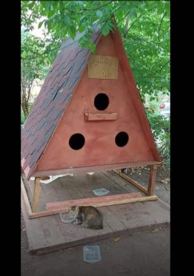Коты на улице Свободы обзавелись собственным жильём
