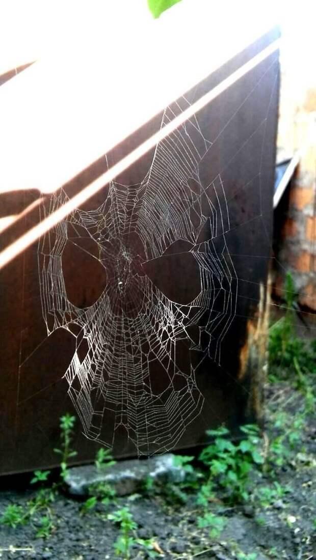 46. Будто маска Человека-паука животные, мир, подборка, природа, ужас, фото, явление