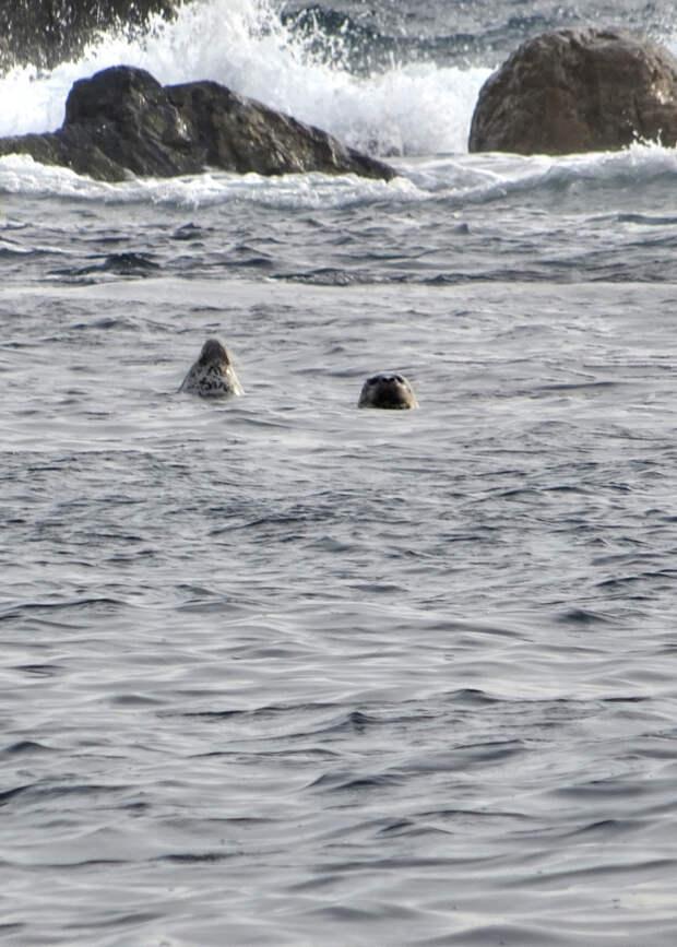 """Путешествие к тюленям Ларги. Кекуры """"Пять Пальцев"""""""