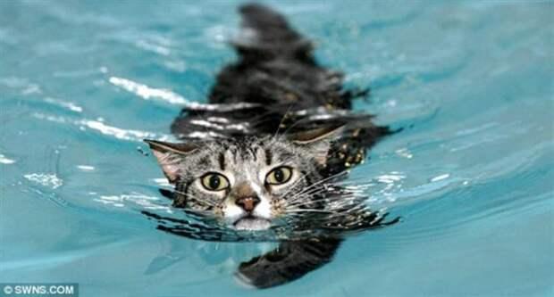 Невезучий парализованный кот стал снова ходить благодаря тому, что научился плавать