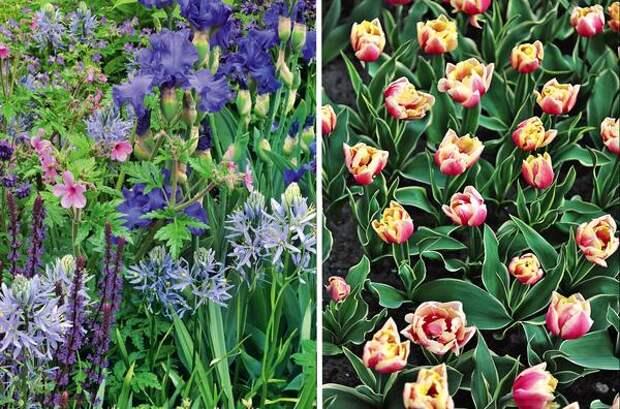 Слева: летние луковичные. Справа: тюльпаны двойной эффект