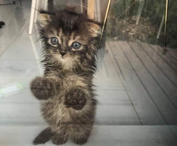 Котенок на задних лапках