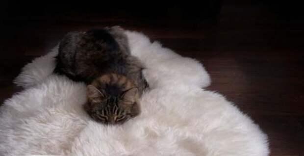 Влюблённому коту речка не преграда