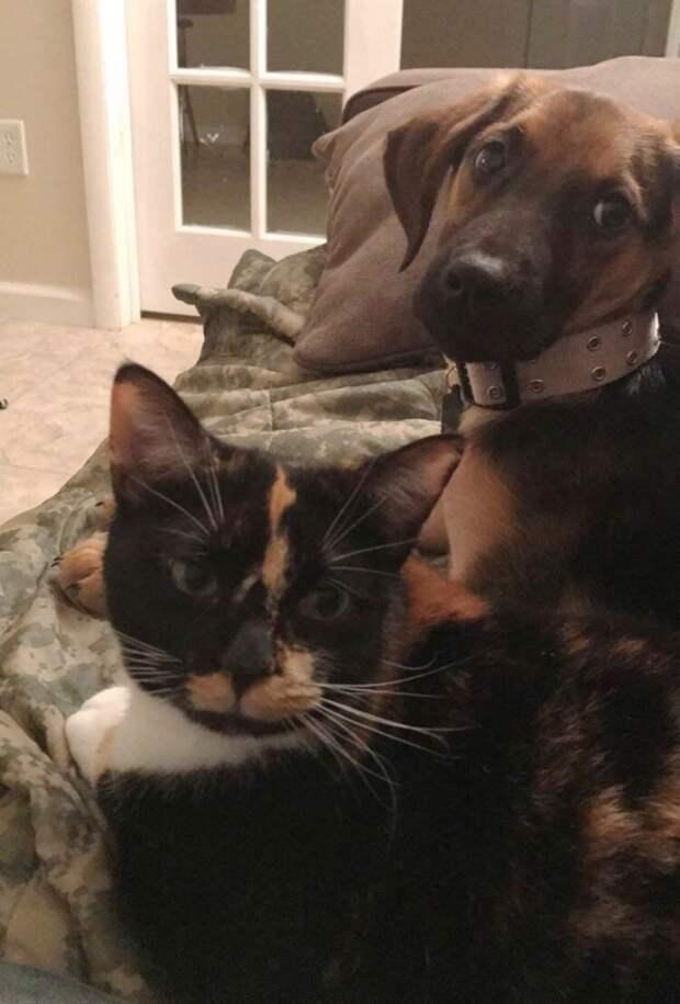 Парень считал себя собачником, но в приюте взял кошку, не устояв перед ее очарованием