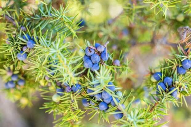 Болезни, вредители и дефекты. Как понять, что поразило садовые растения?