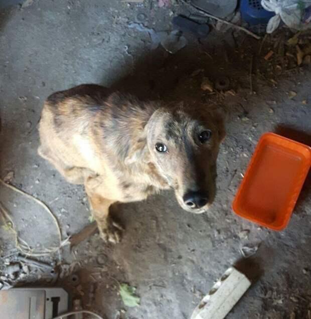 Спасение умирающий собаки собака, спасение, страдания